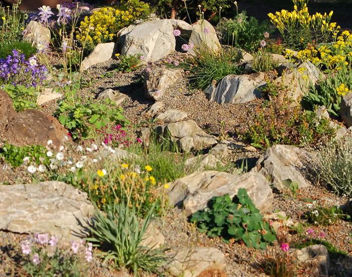 What Are Good Plants For Rock Gardens Hawk Haven Unique Alpine Garden Design Exterior